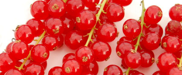 Redcurrants by Vicky Brock 2