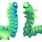 other_caterpillar_sarah_01
