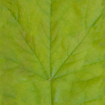 jungle_leaf_generic_color