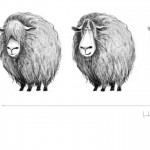sheep_variations_small