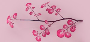 09_pinkleaves_branch